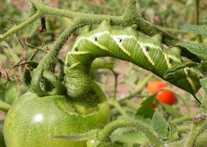 A pest management toolbox to reduce pesticide use