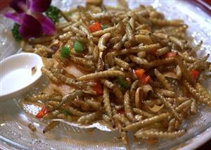 Eating Insects - New Proteins for Farm Animals