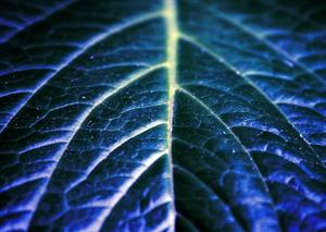 Improving the imperfect: photosynthesis for the future