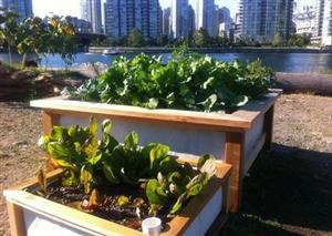 Urban agriculture is more than a hippy-style hobby